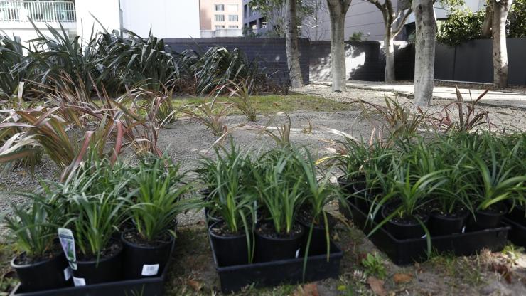 planting-.jpg